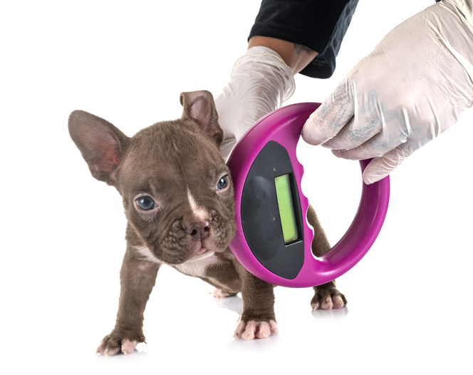 puppy being checked for a microchip