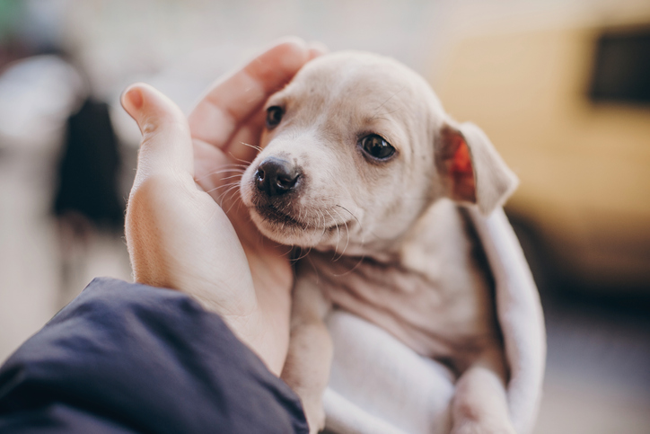 View a puppy before rehoming
