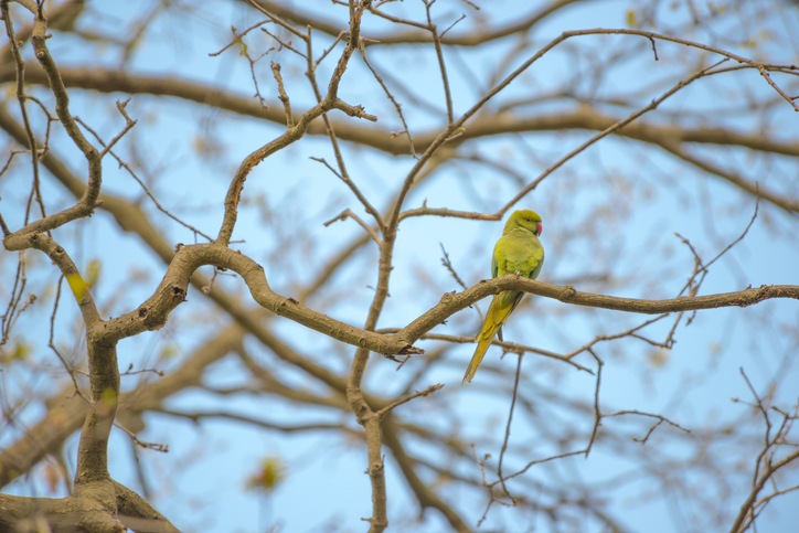 parakeet sits on a branch in the park