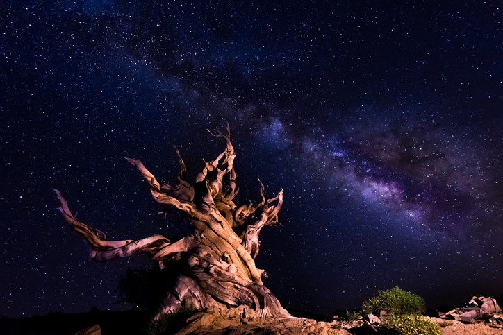 Ancient Bristlecone Pine Forest trees at night