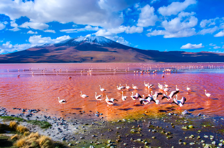Altiplano planes with flamingos wading