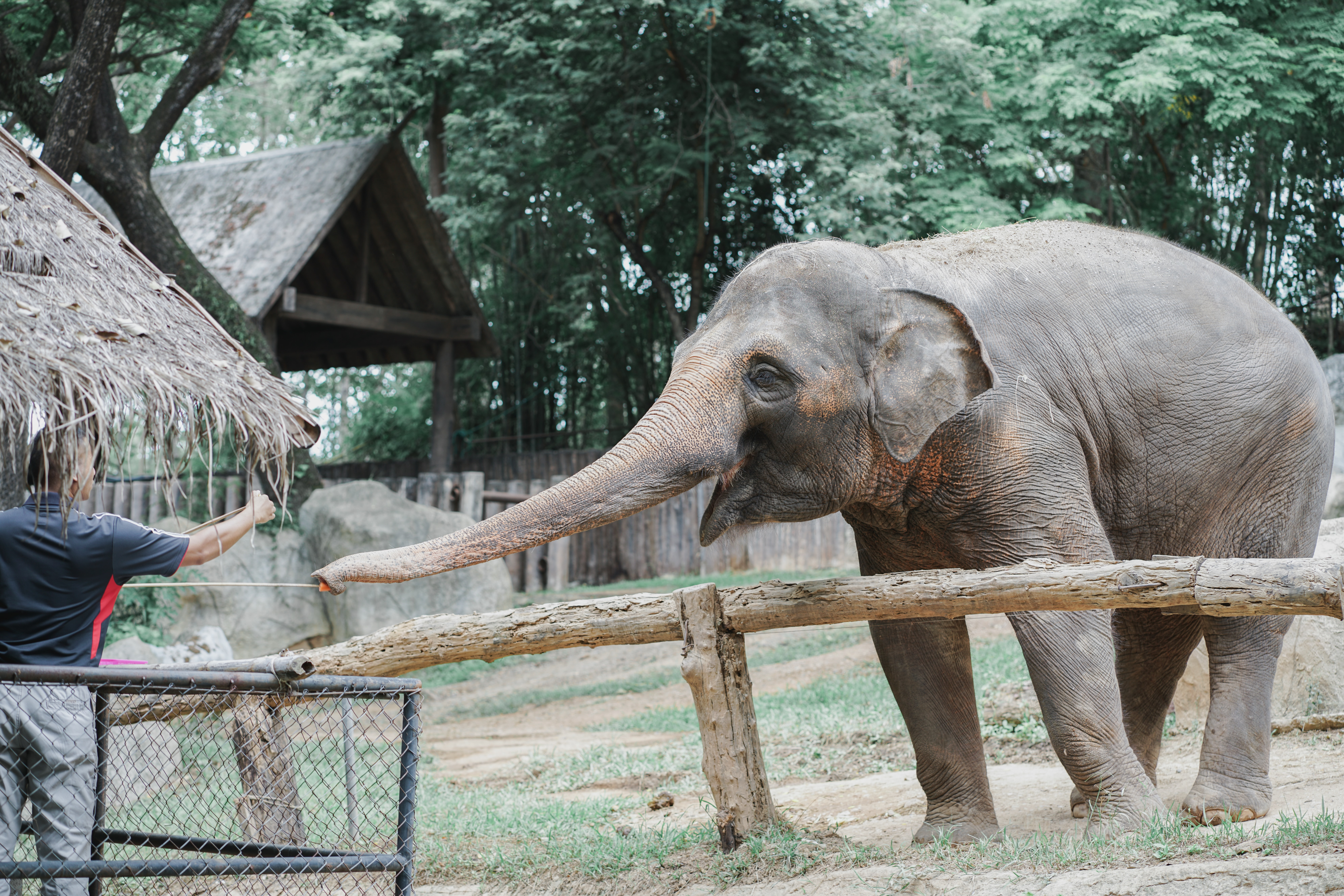 volunteer with elephants while on sabbatical