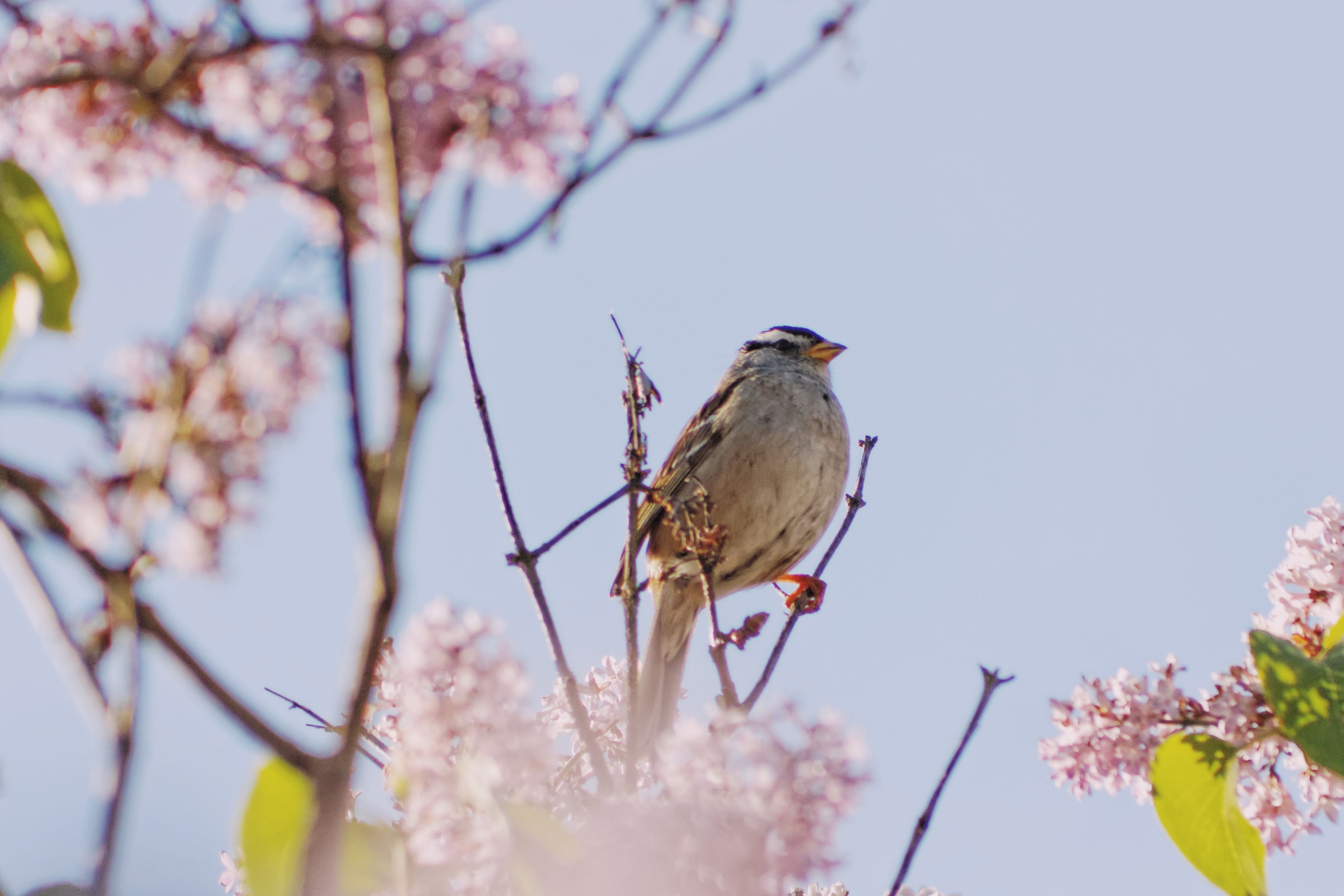 a songbird perched on a branch