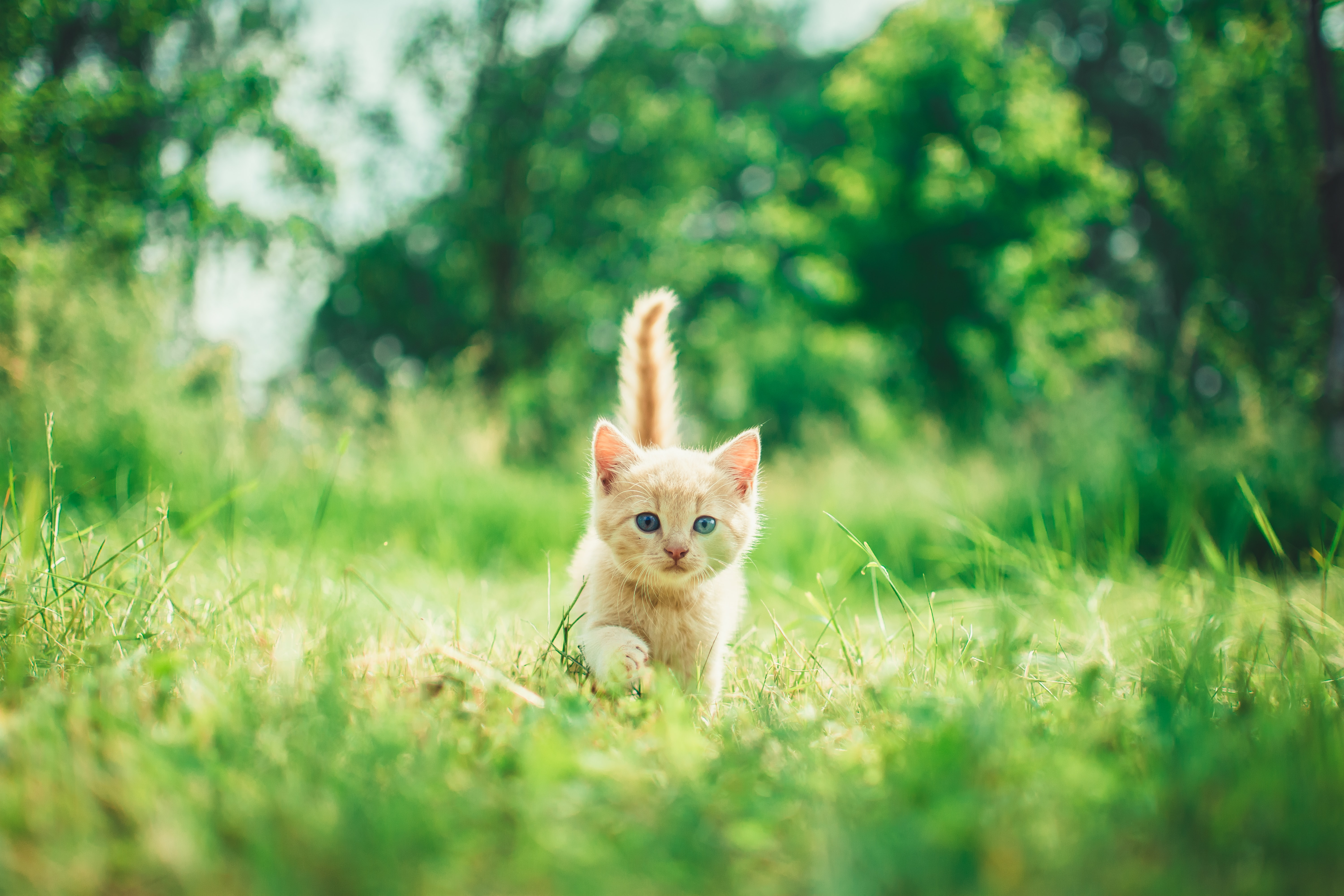a ginger kitten in the grass