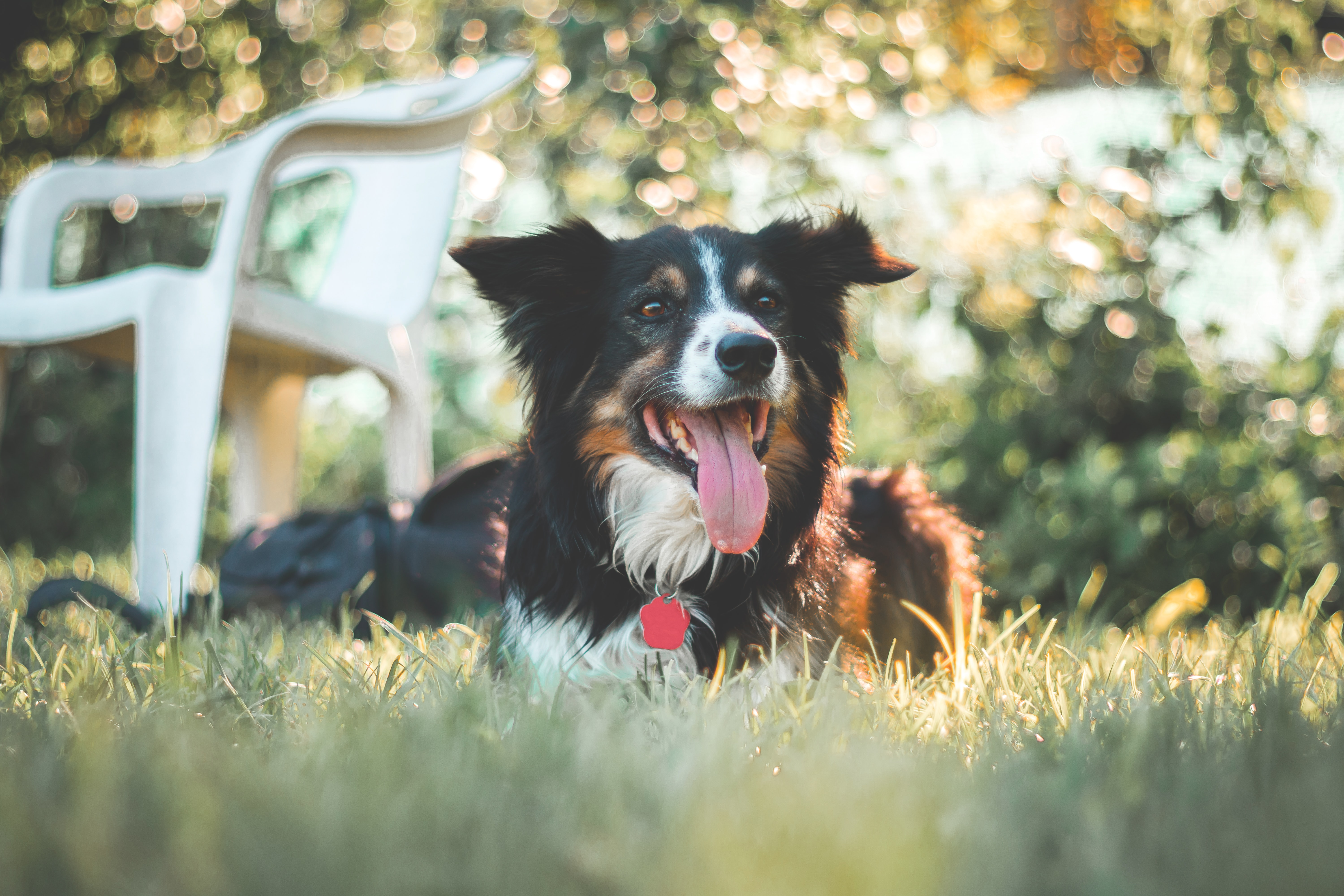 A border collie looking happy in the garden