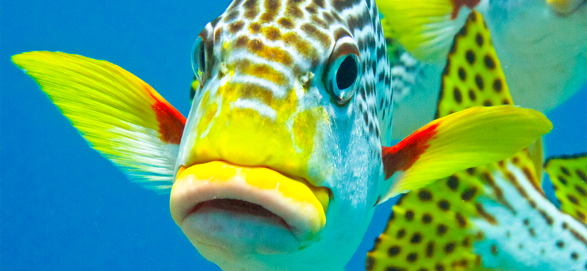 How To Look After Tropical Fish Animals National Pet