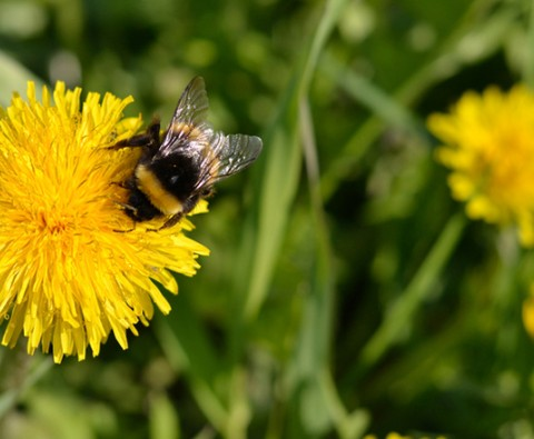 How to attract bees into your garden
