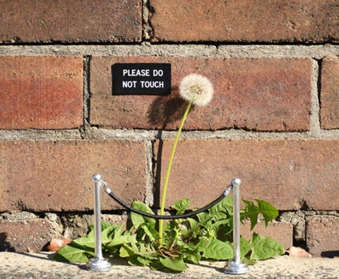 11 Cheeky but genius works of street art