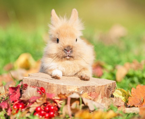 5 Incredible facts you didn't know about rabbits