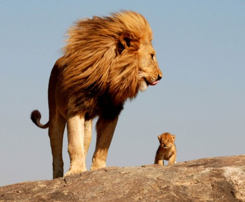 10 Adorable animal dads in action