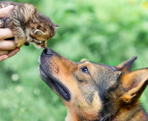 What makes you a dog person or a cat person?