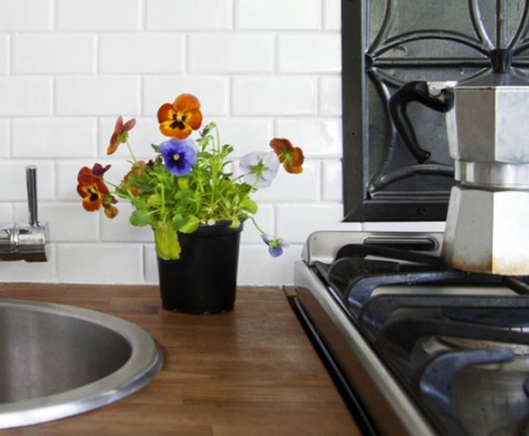 How to make your kitchen green and efficient