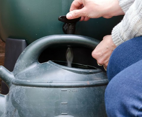 How to collect rainwater for the garden