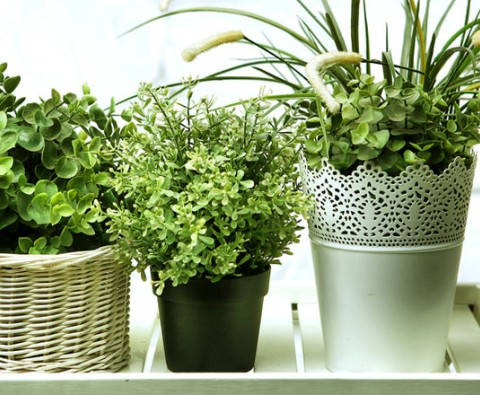 Indoor gardening: Keeping plants healthy