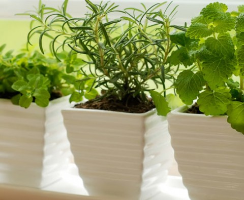 Indoor gardening: Getting the temperature right