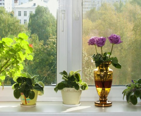 Indoor gardening: Getting the light right