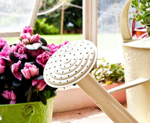Indoor gardening: Watering and humidity