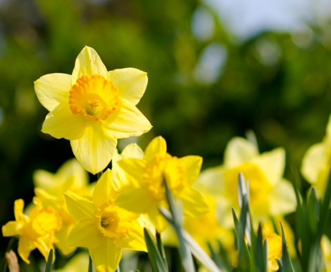 6 Very human facts about Springtime