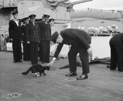 Able Seacat Simon: The war hero of the high seas