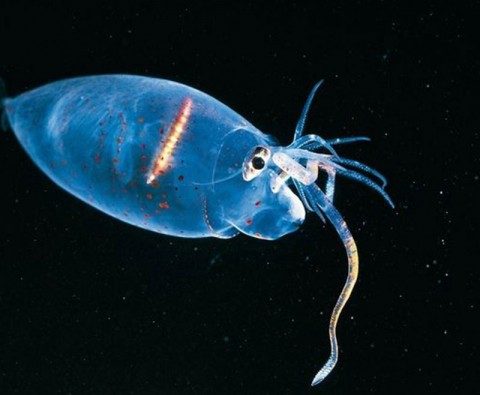 What lies beneath: 7 wonders of the deep-sea