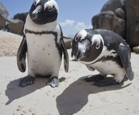 10 Facts that prove penguins are the world's cutest animals
