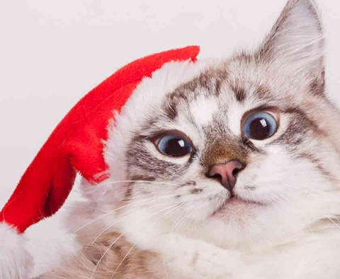 10 adorable animals dressed up for Christmas
