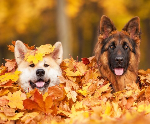9 Dogs who are seriously excited for autumn