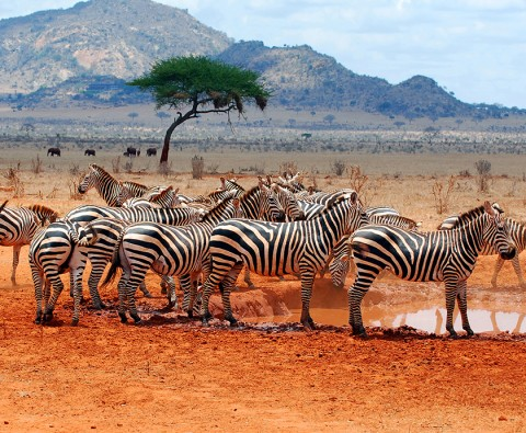 Off the beaten track: African safari alternatives