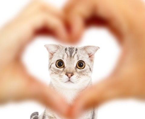 Does your cat really love you?