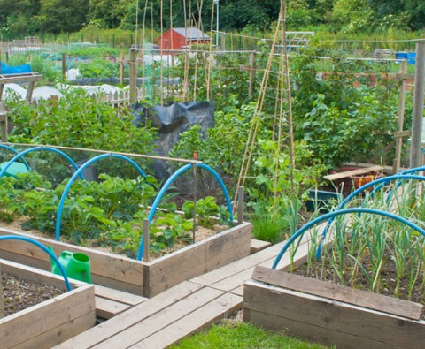 How to get your allotment growing