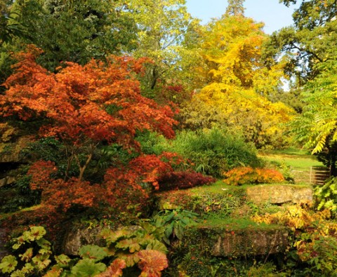 13 Best of British trees