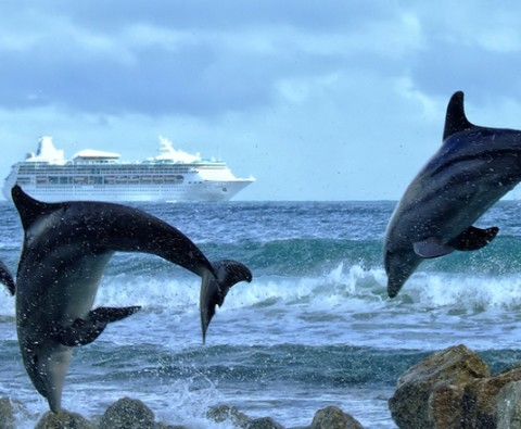 Sea creatures to look out for when cruising
