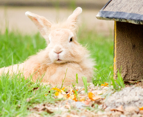 How to build a rabbit paradise