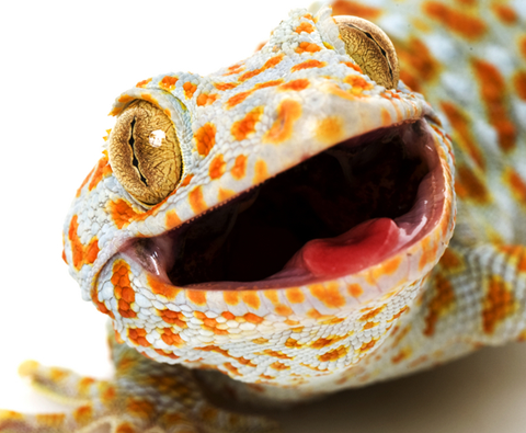 What to consider when keeping reptiles