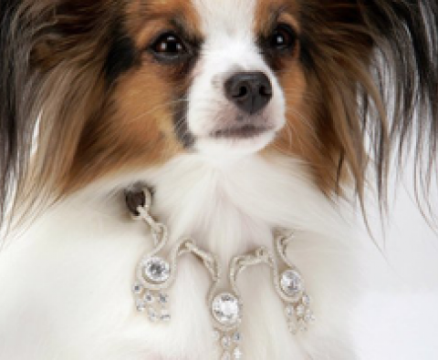 The 10 Most Extravagant Pet Accessories out there