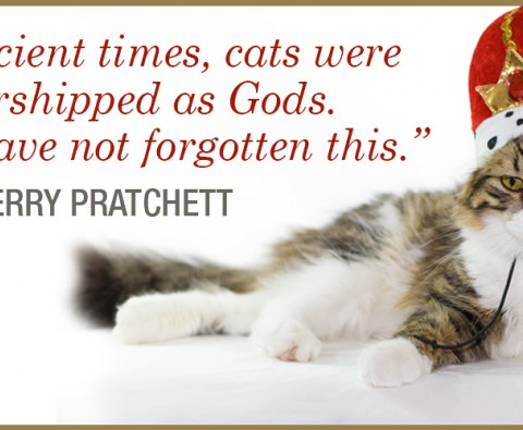 10 Literary Kitties to Purr Over