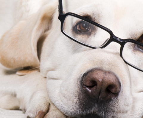 How these 3 brainy dogs are making lives better