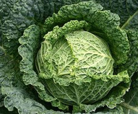 10 Wonderful Ways with Cabbage