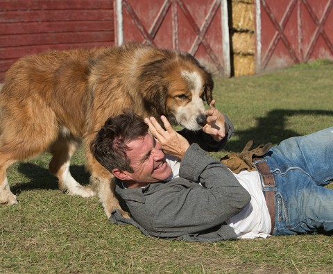 Interview: Dennis Quaid on A Dog's Purpose