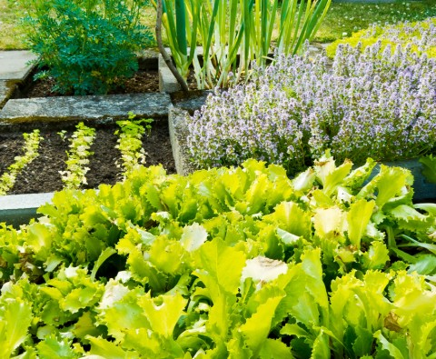 5 Eco-Friendly Gardening Tips