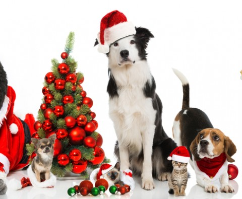 9 Christmas pet gifts
