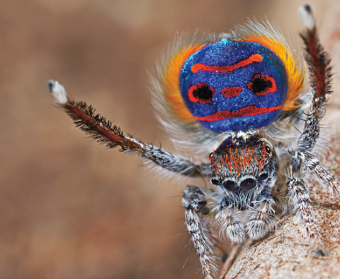 Watch this incredible spider do a voodoo dance
