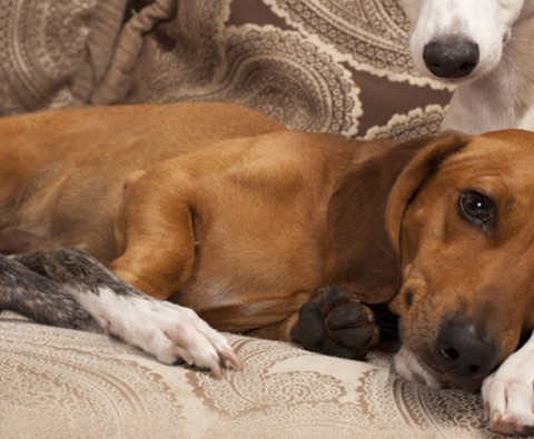 How to remove pet smells from the home