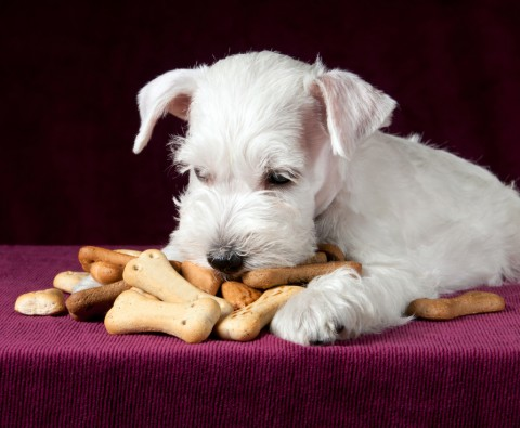 Bake Your Own Delicious Dog Biscuits