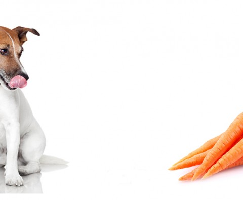 5 Ways to Get Your Dog Eating Right