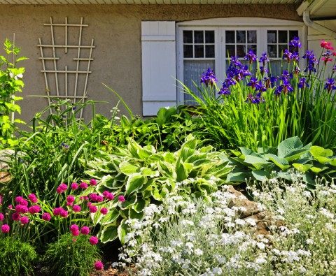Growing perennials: a checklist for Spring