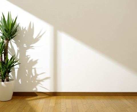 Where to put house plants