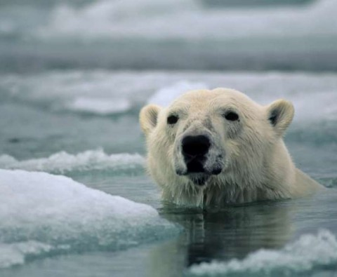 Marooned with polar bears: Part Two