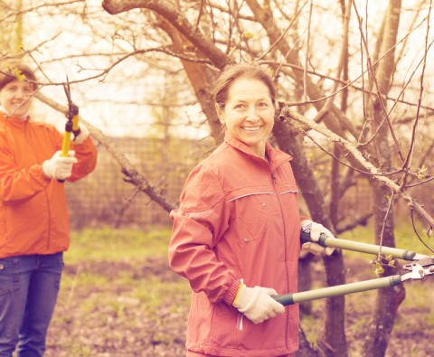How to prune your apple tree for a bumper crop