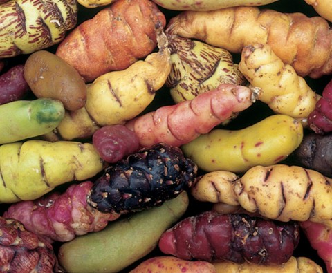 4 Unusual veg to try growing this year